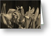 Light And Dark  Greeting Cards - Day Lilies Greeting Card by Joy DiNardo Bradley         DiNardo Designs                     