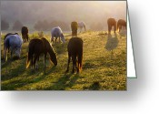 Ron Mcginnis Photography Greeting Cards - Daybreak Greeting Card by Ron  McGinnis