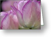 2012 Flower Calendar Greeting Cards - Daydreamer Greeting Card by Juergen Roth