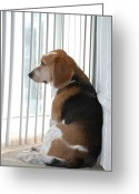 Hound Greeting Cards - Daydreaming Greeting Card by Jennifer Lyon