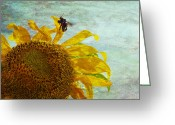 Flowers Photographs Greeting Cards - Daydreaming Greeting Card by Toni Hopper