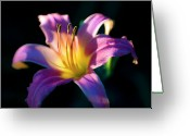 Tamyra Ayles Greeting Cards - Daylily Glow Greeting Card by Tamyra Ayles