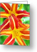 Upright Greeting Cards - Daylily Greeting Card by Melanie Viola