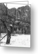 Merced County Greeting Cards - Dead Tree and Yosemite Falls Greeting Card by Troy Montemayor