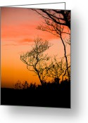 Bonnes Eyes Fine Art Photography Greeting Cards - Dead Tree Greeting Card by Bonnes Eyes Fine Art Photography