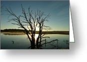 Masterful Greeting Cards - Dead Tree Dawn Greeting Card by Brian  Maloney