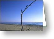 Alone Greeting Cards - Dead tree on a beach Greeting Card by Bernard Jaubert