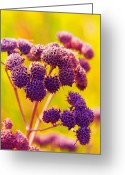 Lime Digital Art Greeting Cards - Dead Weed on Lime Greeting Card by Bill Tiepelman