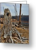 Delaware River Greeting Cards - Dead wood Greeting Card by Paul Ward
