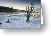 Mammoth. Greeting Cards - Dead Wood Springs Greeting Card by Chad Davis