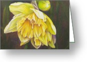 Narcissus Drawings Greeting Cards - December Flower Narcissus Greeting Card by Janae Lehto