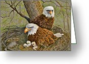 Eagle Drawings Greeting Cards - Decorah Eagle Family Greeting Card by Marilyn Smith