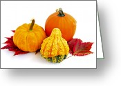 Pumpkin Farm Greeting Cards - Decorative pumpkins Greeting Card by Elena Elisseeva