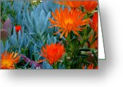 Plants Greeting Cards Greeting Cards - Deep Orange Greeting Card by Jean Marshall
