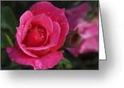 Rosy Greeting Cards - Deep Pink Beauty Greeting Card by Rona Black