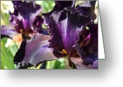 Flower Photograph Greeting Cards - Deep Purple Irises Dark Purple Irises Summer Garden Art Prints Greeting Card by Baslee Troutman Art Collections