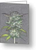 Comicbook Greeting Cards - Deep Purple Kush Art Greeting Card by Albert Cannaphotography