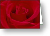 Square Digital Art Greeting Cards - Deep Red Rose Greeting Card by Mike McGlothlen