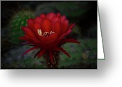 Night Blooming Greeting Cards - Deep Red Greeting Card by Saija  Lehtonen