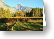 Grass Greeting Cards - Deer And Half Dome Greeting Card by Sandy L. Kirkner