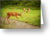 Fall Photographs Greeting Cards - Deer Crossing Greeting Card by Kathy Jennings