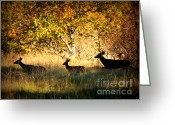 Fall Scene Greeting Cards - Deer Family in Sycamore Park Greeting Card by Carol Groenen