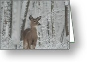 Intent Greeting Cards - Deer In The Snow Greeting Card by Douglas Barnett
