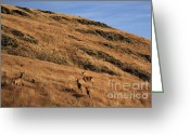 Photo Art Greeting Cards - Deer on mountain 3 Greeting Card by Pixel  Chimp