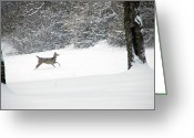 Does. Winter Greeting Cards - Deer Running Greeting Card by Aimee L Maher