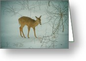 Connecticut Winter Scene Greeting Cards - Deer Winter Greeting Card by Karol  Livote