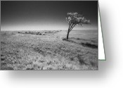 Grasslands Greeting Cards - Defiance Greeting Card by Thomas Bomstad