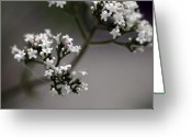 Tiny Flowers Greeting Cards - Delicate Balance Greeting Card by Amanda Barcon