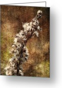 Wildflower Fine Art Greeting Cards - Delicate Balance of Life Greeting Card by Skip Nall