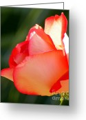 Blossoms Greeting Cards - Delicate Beauty Greeting Card by Karen Wiles