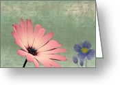 Flower Photograph Greeting Cards - Delicate Flower Greeting Card by Ian Barber