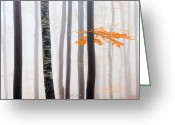 Evgeni Dinev Greeting Cards - Delicate Forest Greeting Card by Evgeni Dinev
