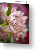 Conservatory Photo Greeting Cards - Delicate Garden Greeting Card by Mike Reid