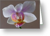 White Orchids Greeting Cards - Delicate Orchid Greeting Card by Juergen Roth