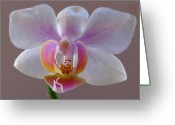 White Orchids Greeting Cards - Delicate Orchid Portrait Greeting Card by Juergen Roth