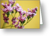 Purple Greeting Cards - Delicate Purple Greeting Card by Cathie Tyler