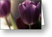 Flower Cards Greeting Cards - Delicate Purple Tulips Greeting Card by Jayne Logan