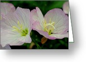 Utopia Greeting Cards - Delicate Greeting Card by Robert Harmon