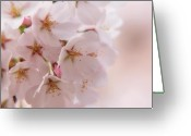 Light Greeting Cards Greeting Cards - Delicate Spring Blooms Greeting Card by Angie McKenzie