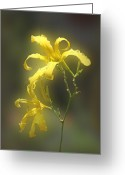 Color Pyrography Greeting Cards - Delicate Yellow Lilies Greeting Card by Linda Phelps