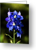Blue Delphinium Greeting Cards - Delph Blue Greeting Card by Vickie Emms