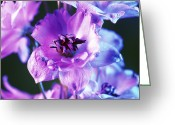 Blue Delphinium Greeting Cards - Delphinium Flowers (delphinium Sp.) Greeting Card by Johnny Greig