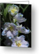 Blue Delphinium Greeting Cards - Delphinium Greeting Card by Marjorie Imbeau