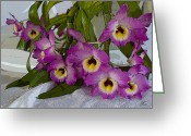 Dendrobium Greeting Cards - Dendrobium Delight Greeting Card by Joanne Smoley