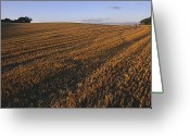 Generic Greeting Cards - Denmark Agricultural Field In Zealand Greeting Card by Keenpress