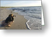 Color Bending Greeting Cards - Denmark Young Woman Taking Pictures Greeting Card by Keenpress